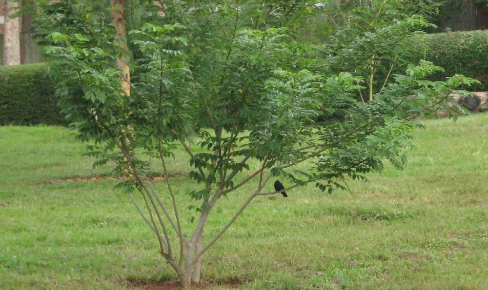 Rencontre ibis